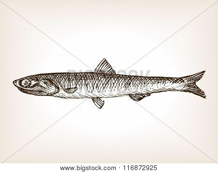 Anchovy fish sketch style vector illustration