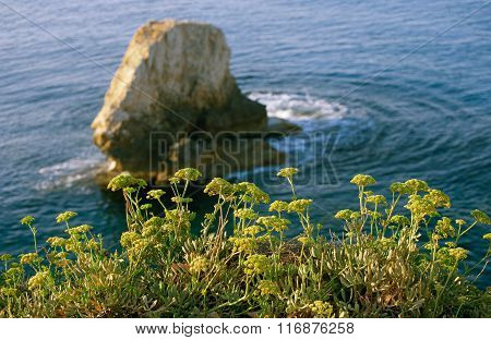Plants on seacoast against the backdrop of cliffs