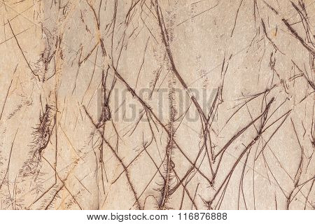Tree Roots Covered Cement Walls At Home