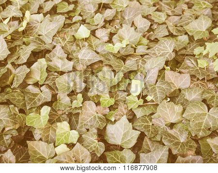 Retro Looking Ivy Leaves