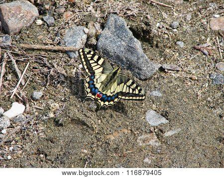 Beautiful yellow butterfly - photo 1