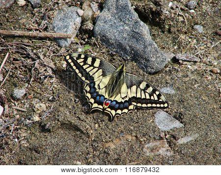 Beautiful yellow butterfly - photo 3