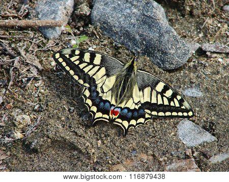 Beautiful yellow butterfly - photo 4