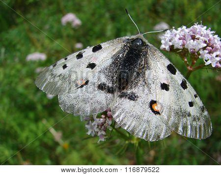 Beautiful white butterfly - photo 1