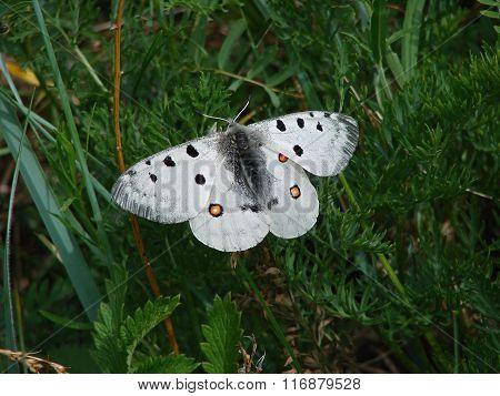 Beautiful white butterfly - photo 2