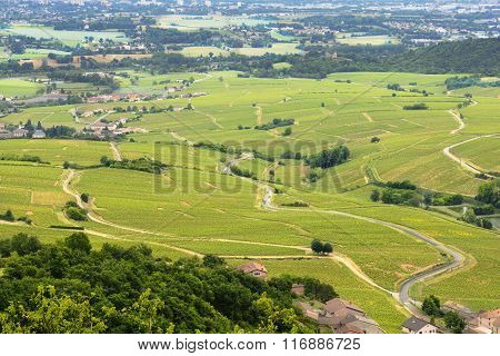 Vineyards Of Beaujolais, France