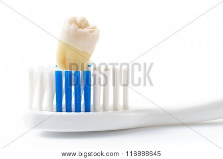 Extracted tooth and toothbrush, isolated on white