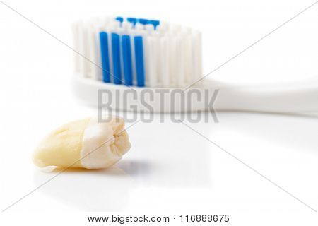 Extracted tooth and toothbrush isolated on white