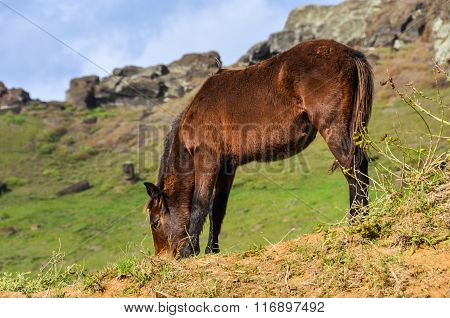 Horse In The Crater Of Rano Raraku Volcano, Easter Island, Chile