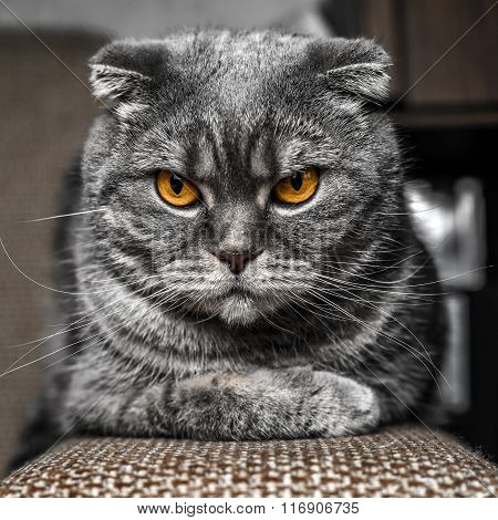 Very serious and cute cat