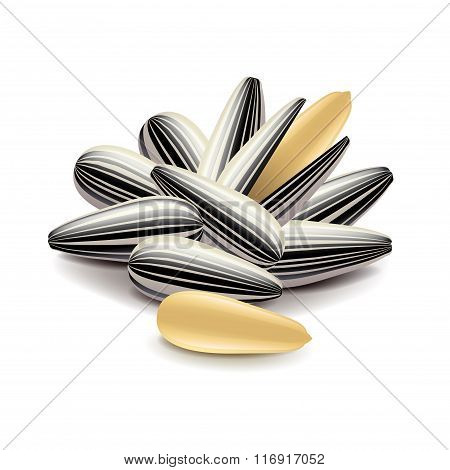 Sunflower Seeds Isolated On White Vector