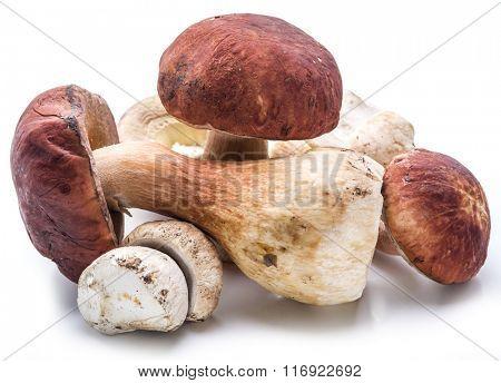 Porcini mushrooms isolated on a white background.