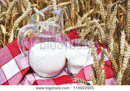 Jug of milk among wheat ears