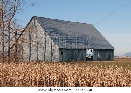 Tree Shadows on Winter Barn