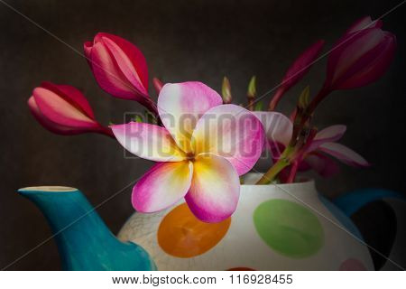 Beautiful Flower Plumeria Or Frangipani In Teapot