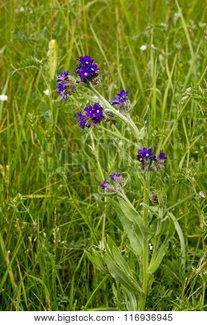 Violet and blue flowers in the grass