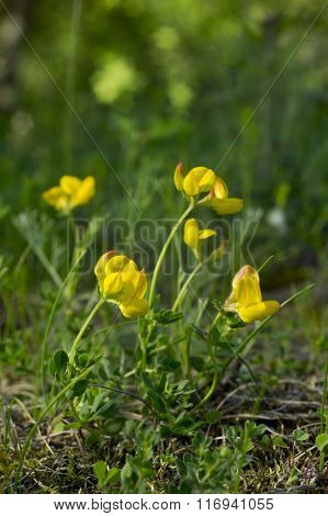 Yellow flower in natural environment.