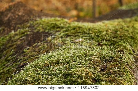 Moss On A Log  On Blurred Background