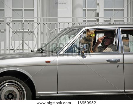Dog In Car With Glasses