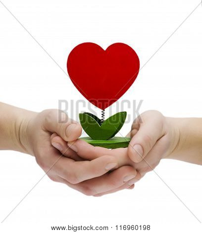 Heart Shape Plant In Hand On White Background