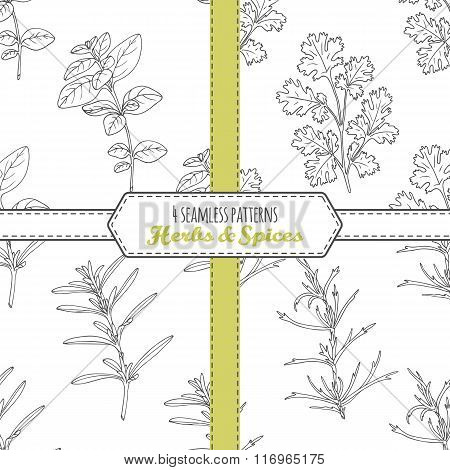 Hand drawn seamless patterns collection with oregano, tarragon, savory, cilantro.