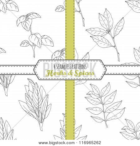 Hand drawn seamless patterns collection with sage, bay leaf, basil, curry