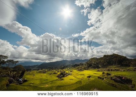 Rice field in a mountains of the island of Sulawesi, Indonesia