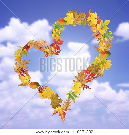 Heart of different  leaves, on blue sky background