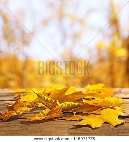 Yellow autumn leaves on wooden table, on nature background