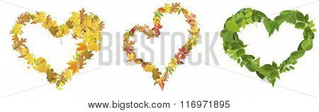 Hearts of different  leaves, isolated on white