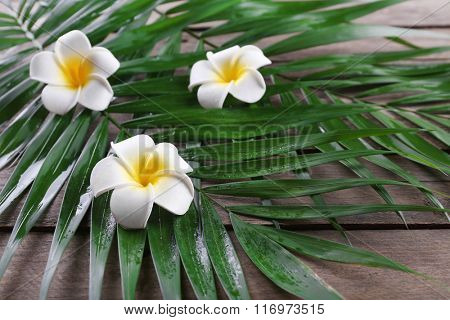 Beautiful composition of frangipani flower with palm leaves on wooden background, close up
