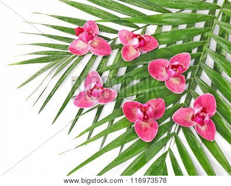 Orchid flowers and palm leaves, closeup