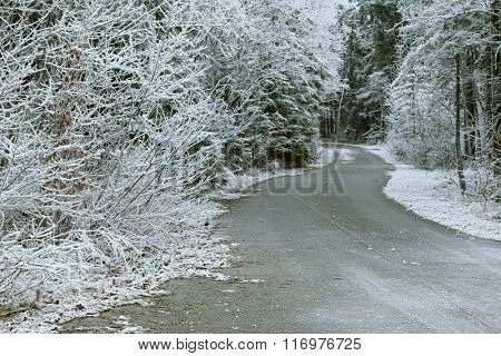 Trees covered with hoarfrost rime ice along the curvy road, beautiful winter scene