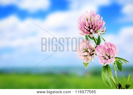 Beautiful wild flowers on meadow, close up