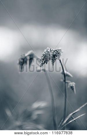 Beautiful flowers growing in field