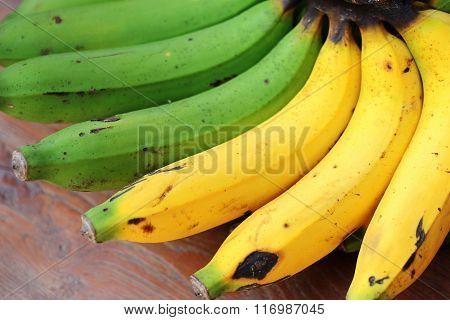 Fresh organic ripe bananas and raw bananas in one banana bunch on  a wooden picnic table