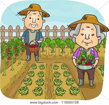 Illustration of a Happily Married Senior Citizen Couple Harvesting At Their Garden