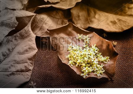 Lovely Little Flowers On Dry Leaf For Brown Nature Background