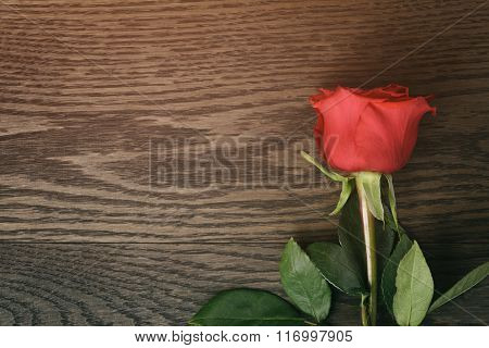 dark red rose on wood table with copy space for something