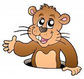 pic of groundhog  - Cartoon groundhog lurking from hole  - JPG