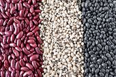 Постер, плакат: Beans Varieties