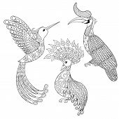 Постер, плакат: Coloring page with Bird Rhinoceros Hummingbird and exotic bird