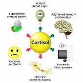 Cortisol Functions poster