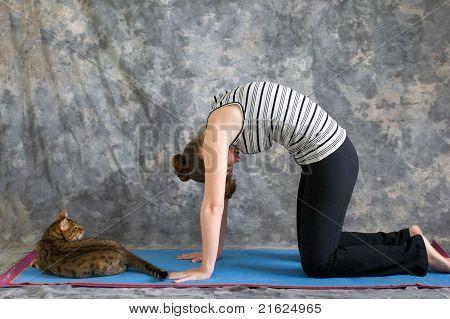 Woman Doing Yoga Posture Marjaryasana Or Cat Pose With  Real Cat