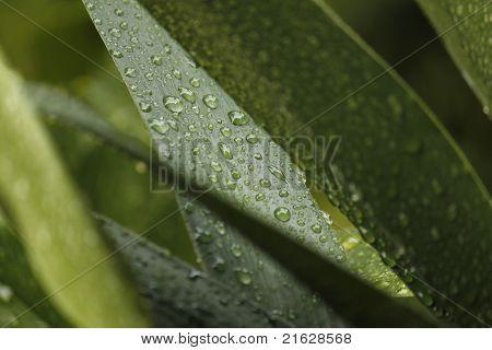 macro lilum
