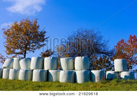 Haylage bales left outdoors for fermentation.