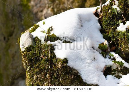 Moss Covered By Snow On Rocks