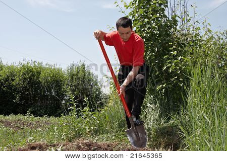 Man In A Vegetable Garden