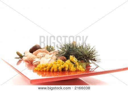 Harvest Season, Nuts