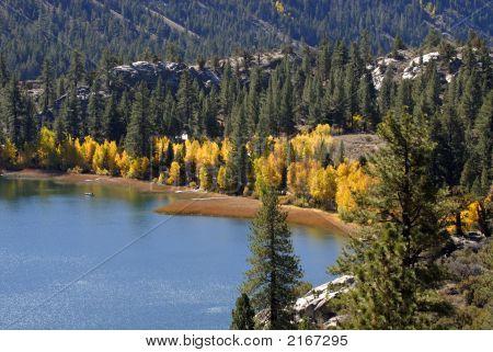 Yellow Aspen Trees On Shoreline